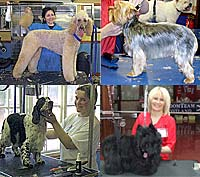Dog Grooming College Courses London