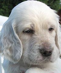 Professional Dog Grooming Carluke Lanarkshire Scotland Scotgroom
